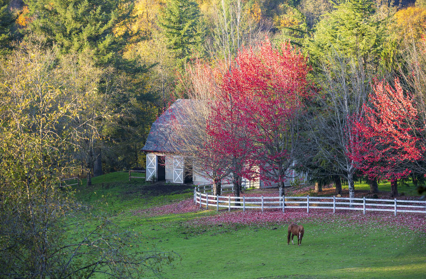 equestrian real estate