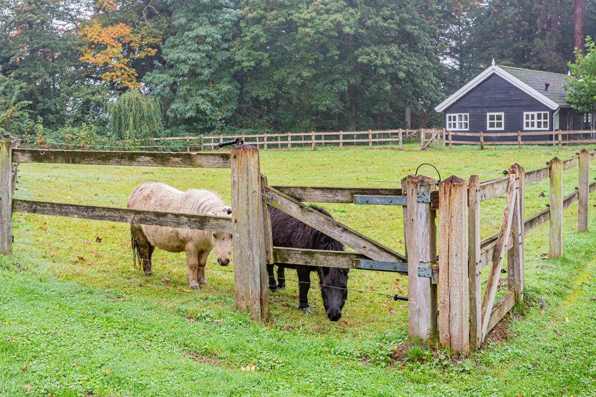 mini horse farm near me