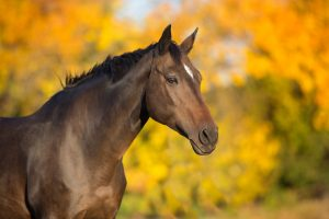 Searching for Equestrian Real Estate Properties