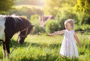 mini horse farm property