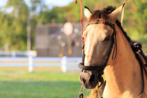 Equestrian Estate Properties