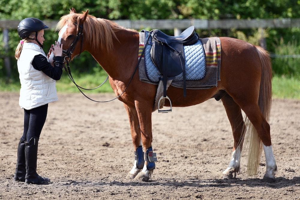Equestrian Estate Properties Lexington