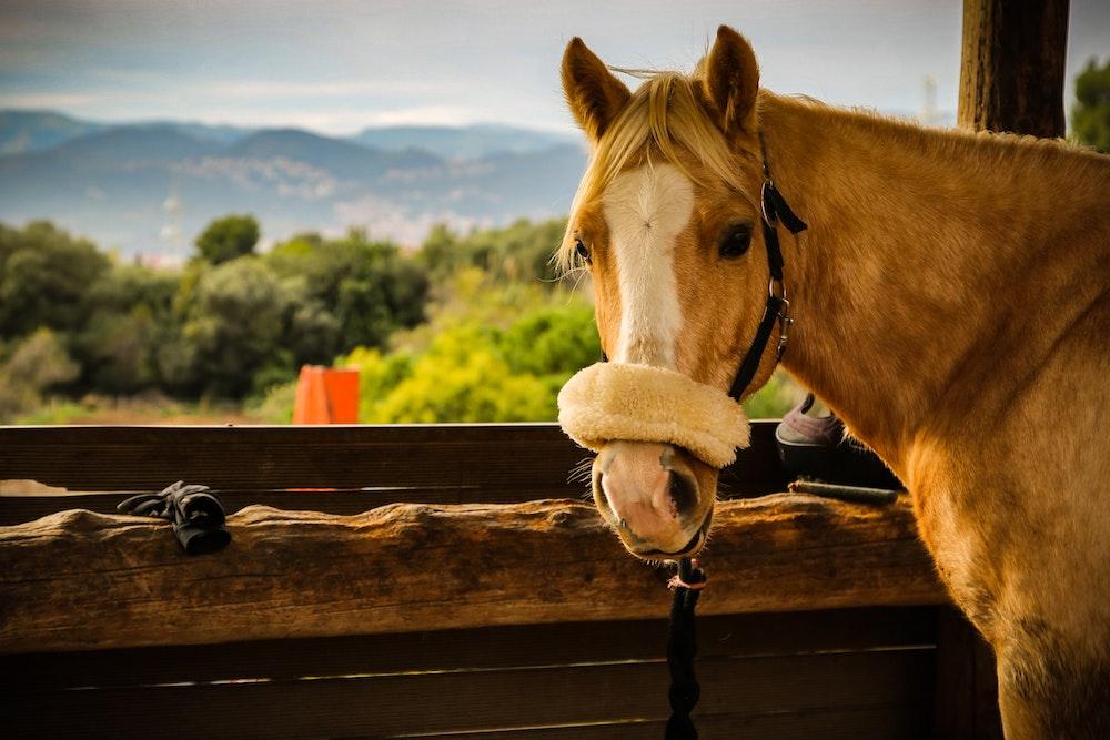 Mini Horse Farm Land
