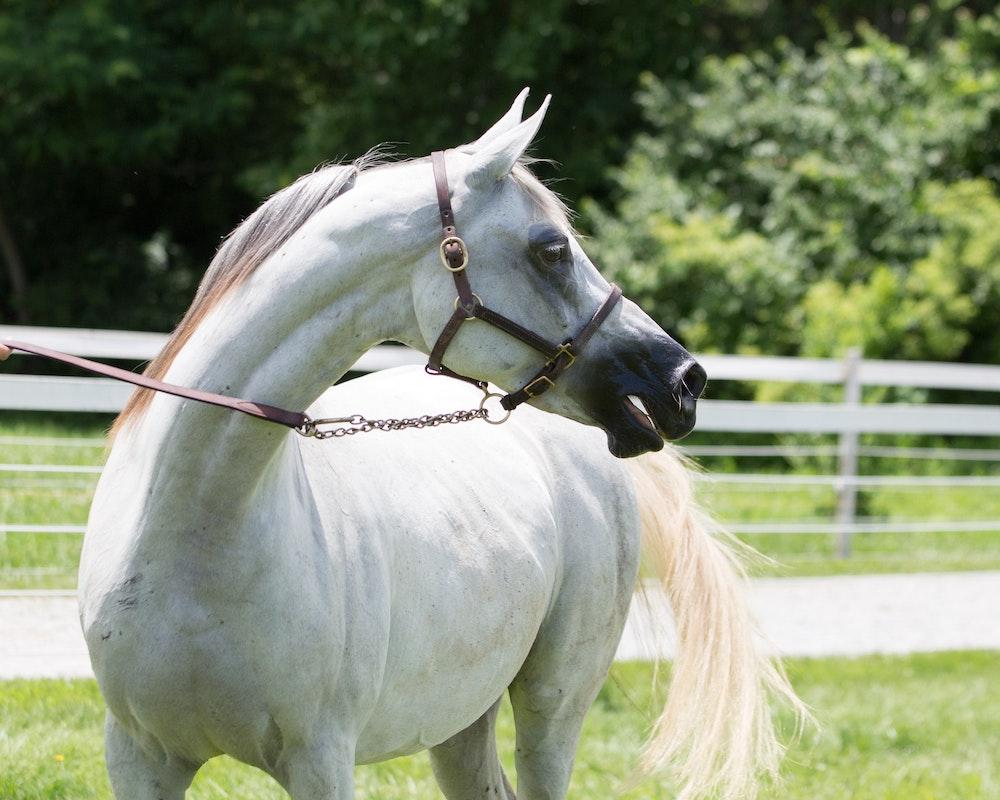 Mini Horse Farm Near Me Listing