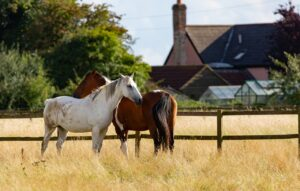 equestrian real estate property
