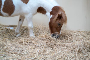 Mini Horse Farm Near Me Search for Property