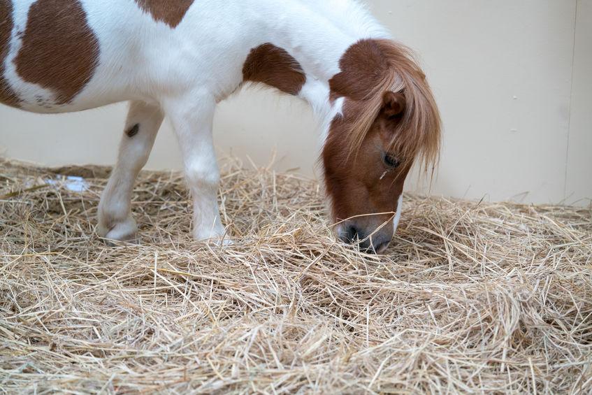 Mini Horse Farm Near Me Search for Property