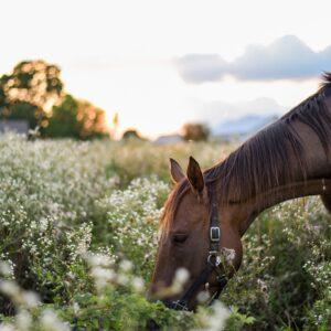 Find a Mini Horse Farm Near Me